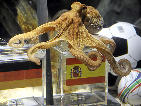 NONFICTION | Paul the Prophetic: An Interview with the Octopus