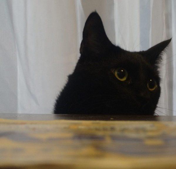 black cat original gangster EclecticEvelyn.com
