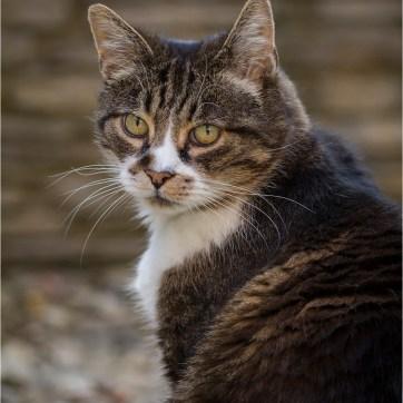 Cat, pet photography, cat photography, cat portrait, pet portrait, pets
