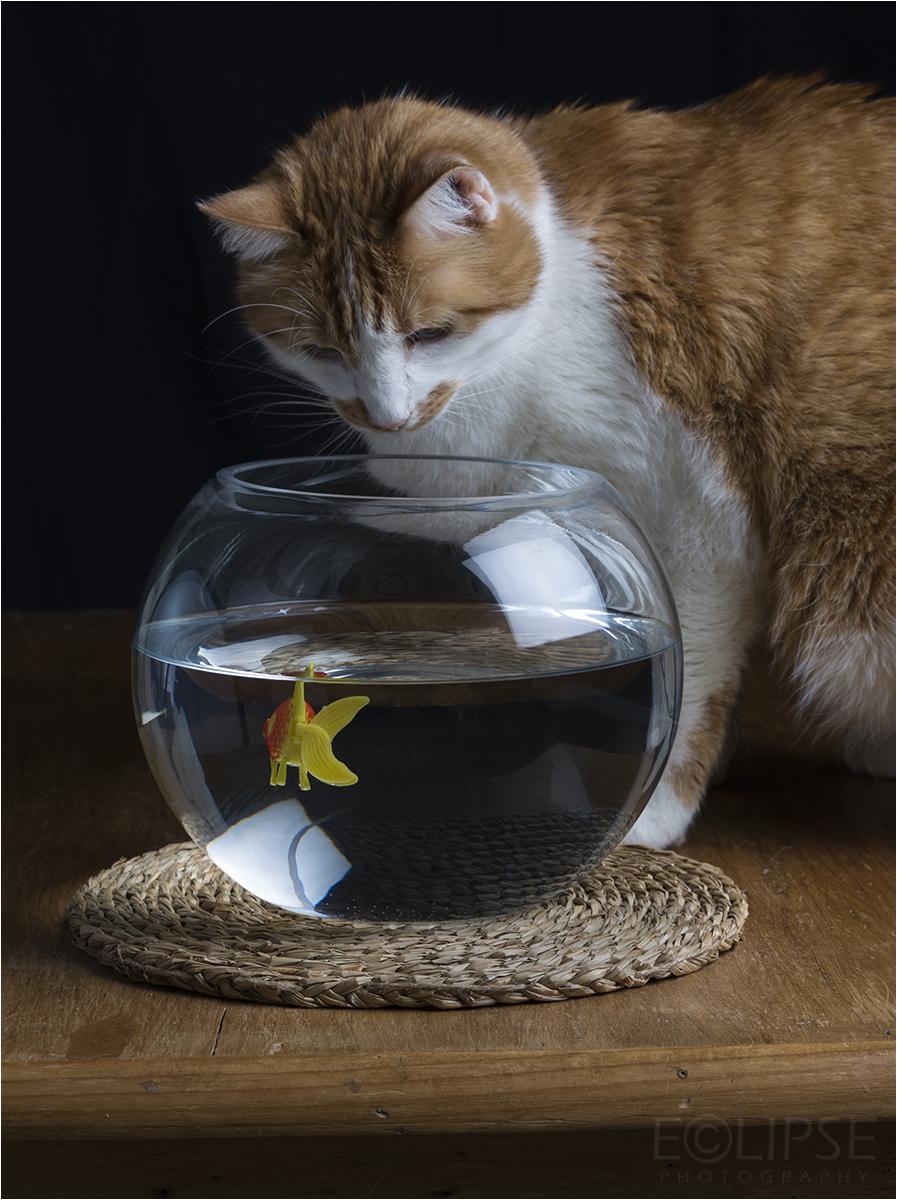 Cat, pet photography, cat photography, cat portrait, pet portrait, cat on blanket, pets