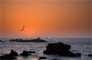 Sunset at Essaouira, sunset and crashing waves, sunset with waves crashing over rocks, setting sun, Seascape, Landscape, Sunset, Lone gull