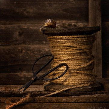 Snail, Garden snail, Garden snail on reel of thread, garden thread, garden thread and scissors, product photography