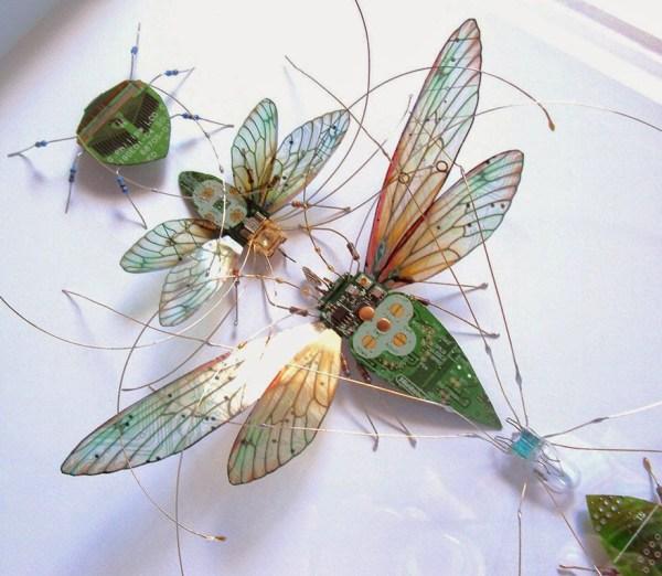 insectos 6