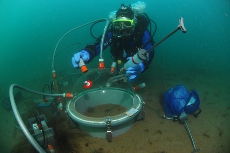 «Les fonds marins bretons sont aussi colorés que dans les tropiques!»