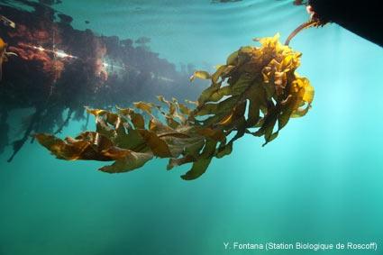 Marinexus : démocratiser les connaissances scientifiques pour mieux gérer l'écosystème marin