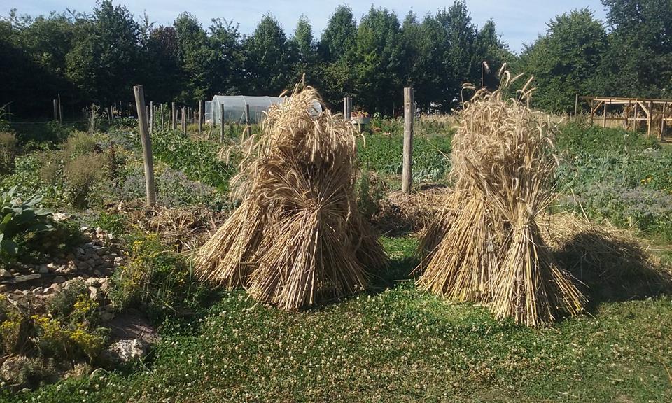 Perma G'Rennes, une micro-ferme en permaculture à Rennes