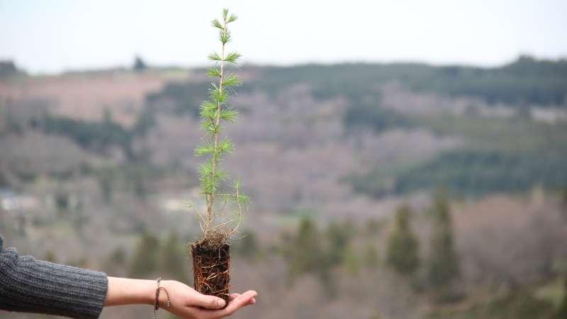 Cellaouate offre 1000 arbres à ses partenaires pour ses 10 ans