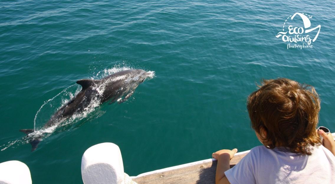 Νεαρό ρινοδέλφινο