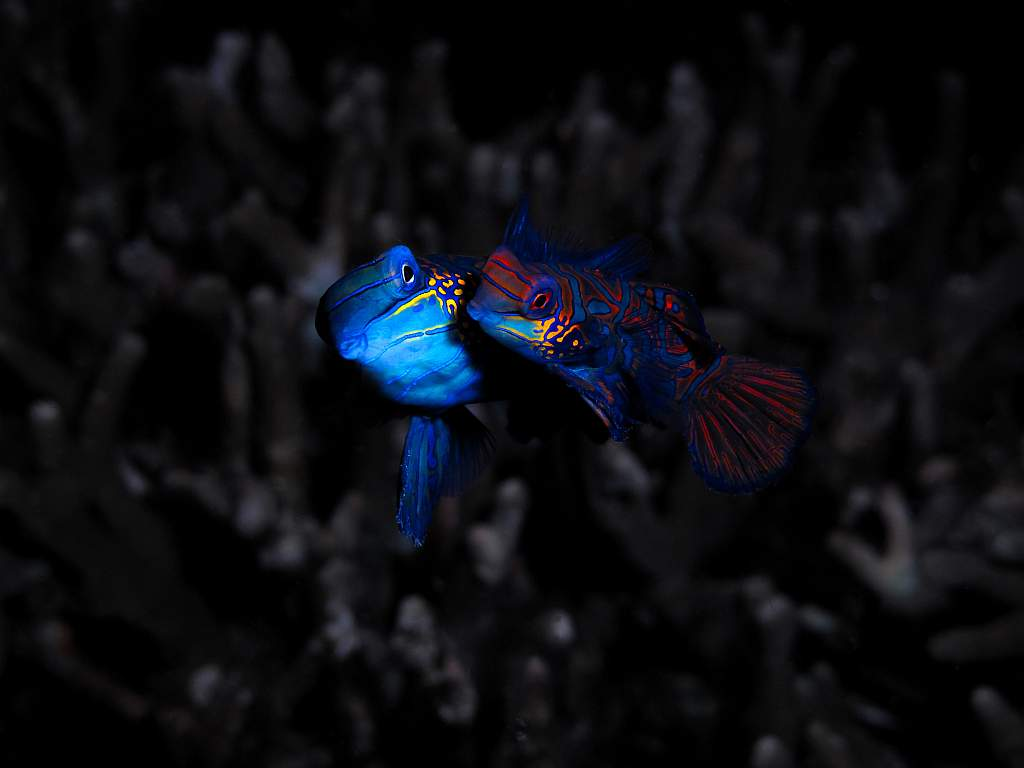 1 PRIZE; Mandarin Fish by Gerald Toh