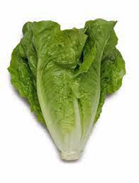 Organic Lettuce - Cos Green - 2 or more 1
