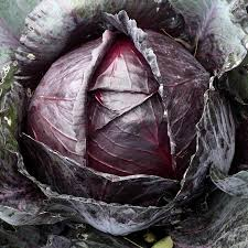 Organic Cabbage - Red - Small 1