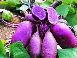 Organic Kumara - Purple Dawn 1