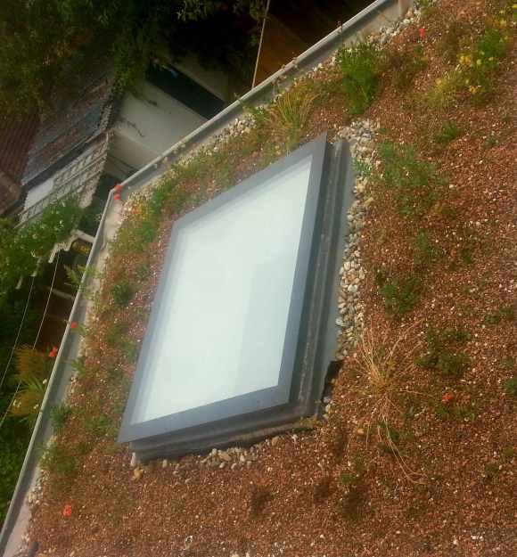 sedum, plug plants, green roof, skylight