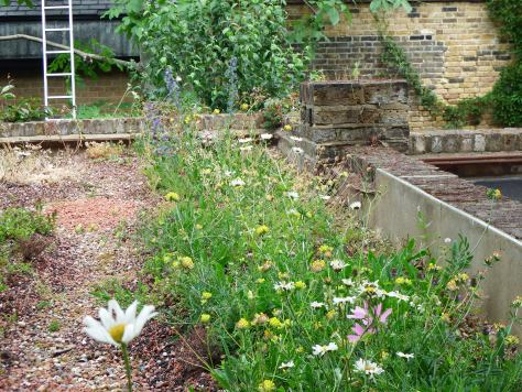A really good selection of wildflowers has sprung up