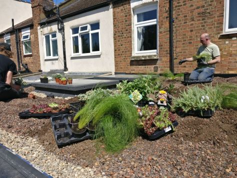 Planting, workers grass
