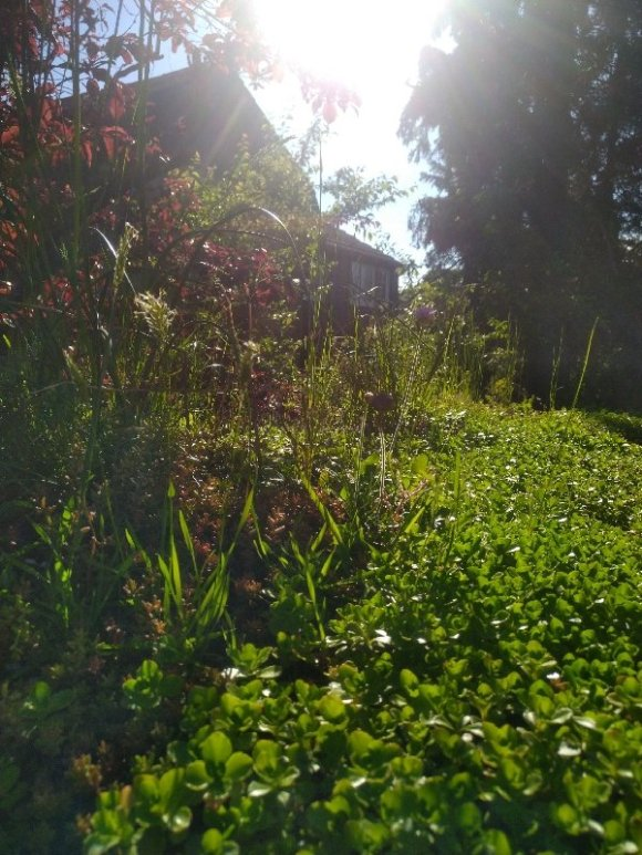 A close up of a green roof with wildflowers on the left and sedum on the right.