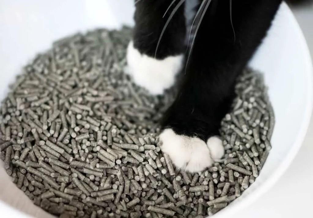 Notre litière est confortable pour votre chat