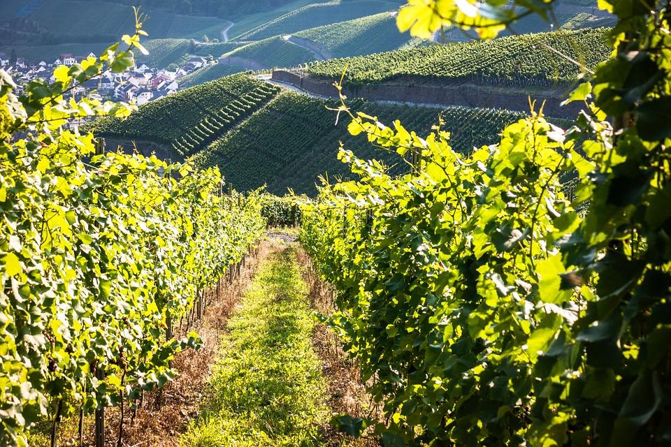 Vers la fin des pesticides pour les vins de Bordeaux ?