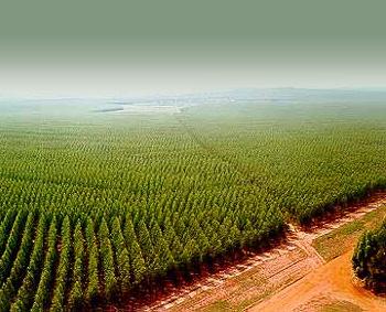 https://i1.wp.com/www.ecoclimatico.com/wp-content/uploads/2008/11/monocultivo.jpg