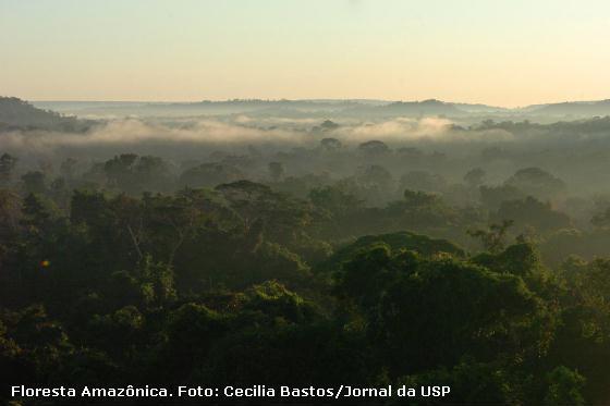 floresta preservada na Amazônia