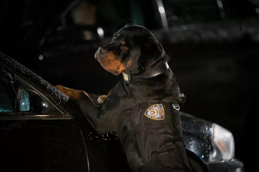 Show Dogs scena film