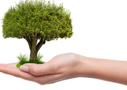 UK Tree Planting for Carbon Offset Delivery & Collection