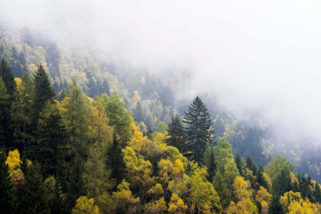 Mining activities impact and change the boreal forest. Ecoforestry Foundation Ekosystembaserat Skogsbruk