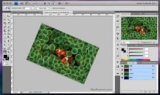 2008 - Adobe Photoshop versão CS4 - área de trabalho