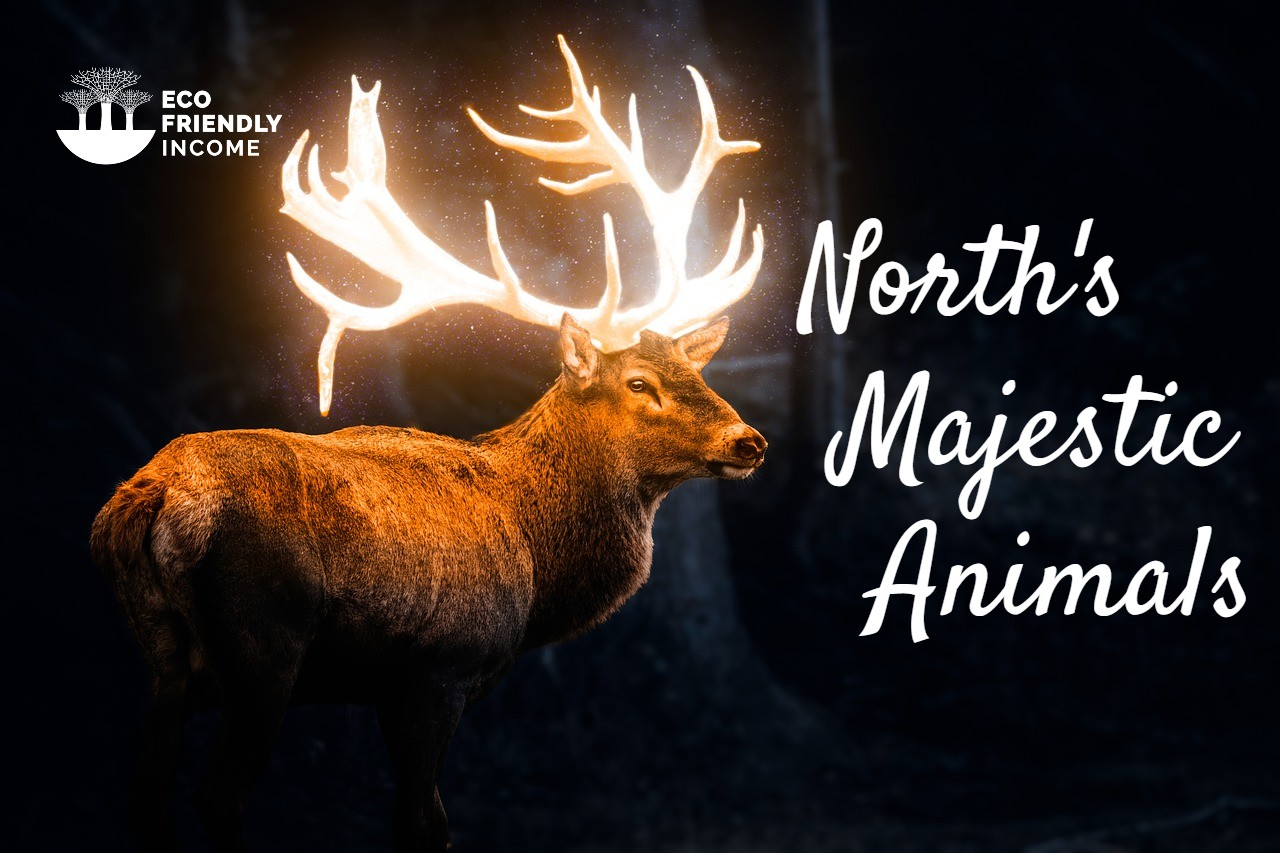Along with polar bears and beluga whales, harbor seals are among the best known animals along the northern manitoba coastline. Boreal Forest Mammals Meet North S Majestic Animals