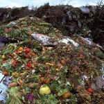 food waste in america is reduced when you preserve food