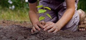 random acts of kindness, plant a tree