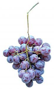 grapes make organic wine