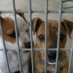 eco friendly christmas gifts for pets help a shelter