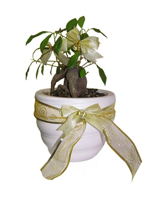 how to plant a tree as a gift