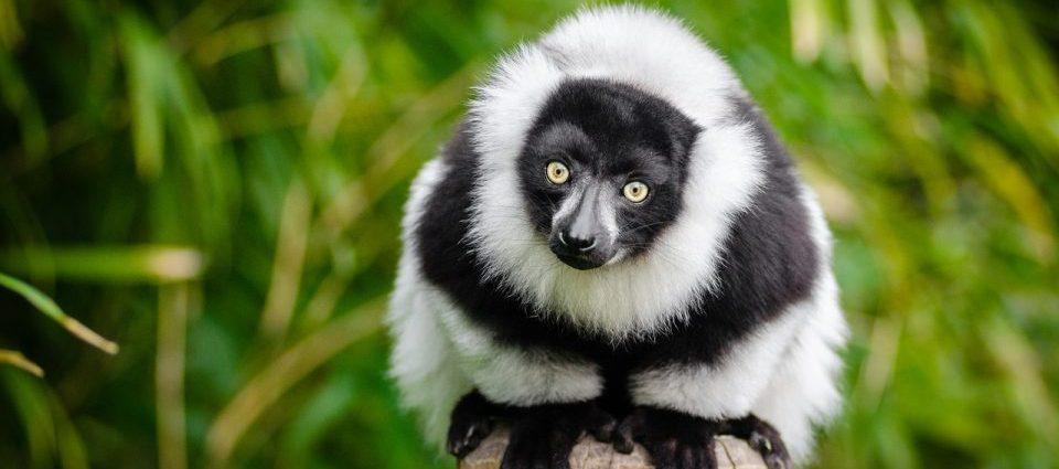 big island of Madagascar