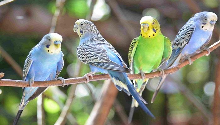 pet bird's