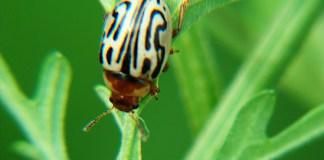 Bio pesticides in India