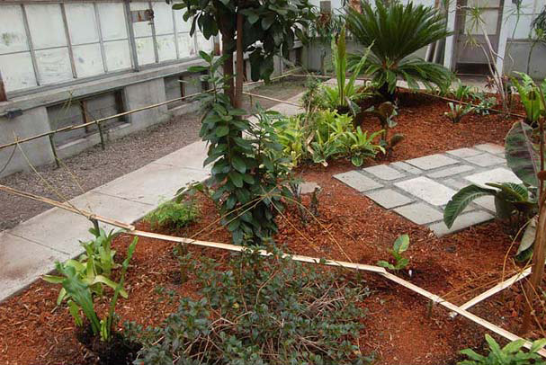 Bamboo Drip irrigation conservation - Traditional Water Conservation India