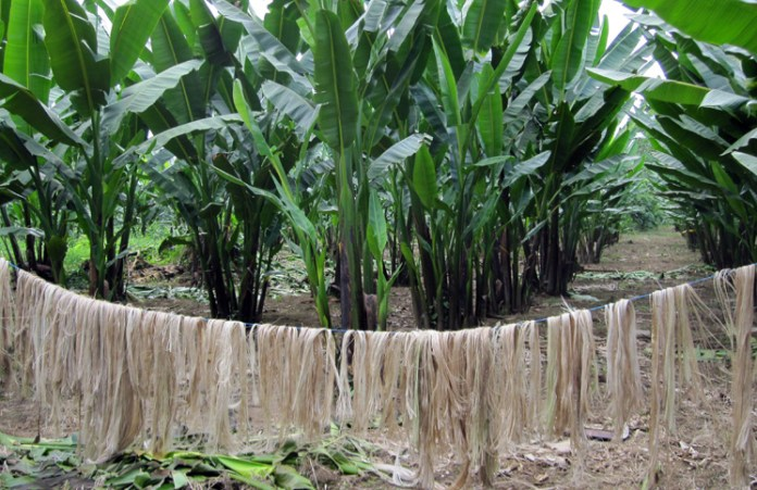 natural fibers India - Banana