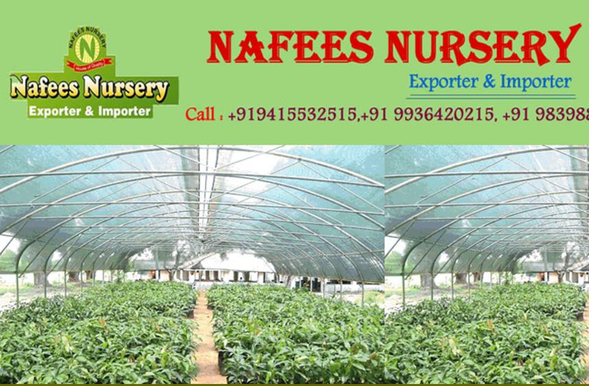 Nafees Nursery