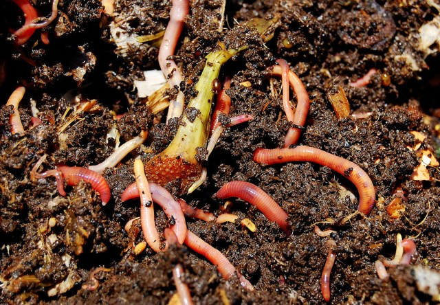Vermicomposting-in-India