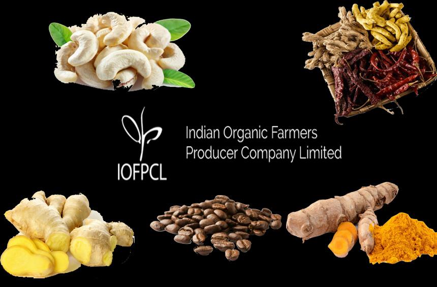 INDIAN ORGANIC FARMERS PRODUCER COMPANY LTD