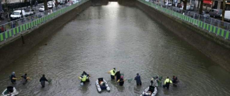 Tens Of Thousands Of Fish Moved As Paris Canal Gets Clean-Up