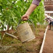Setting Up Your Own Organic Farm