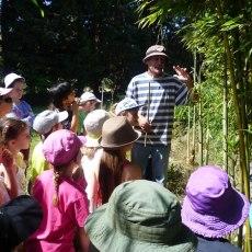 Sortie à la bambouseraie