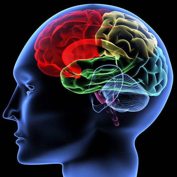 Musique et développement du cerveau