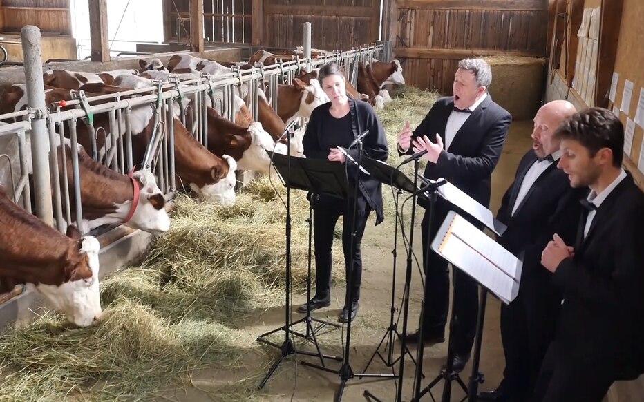 Privés de spectacles, ces chanteurs donnent un concert… pour des vaches !
