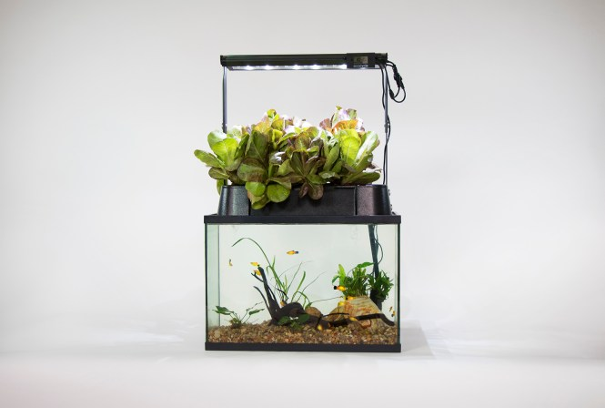 Eco Cycle Remote Aquaponics Kit