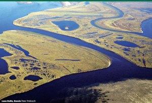 arctic peatland