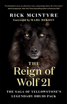 reign of wolf 21 cover